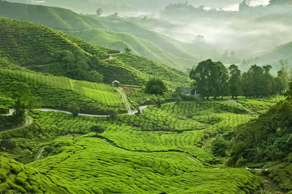 Cameron Highlands holiday during off-peak season