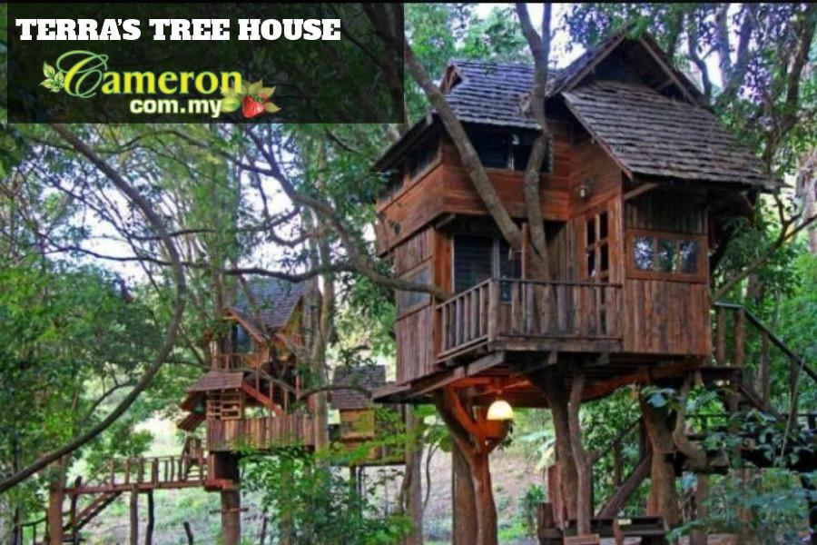 TERRAS-TREE-HOUSE