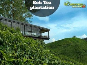 BOH-TEA-PLANTATIONS