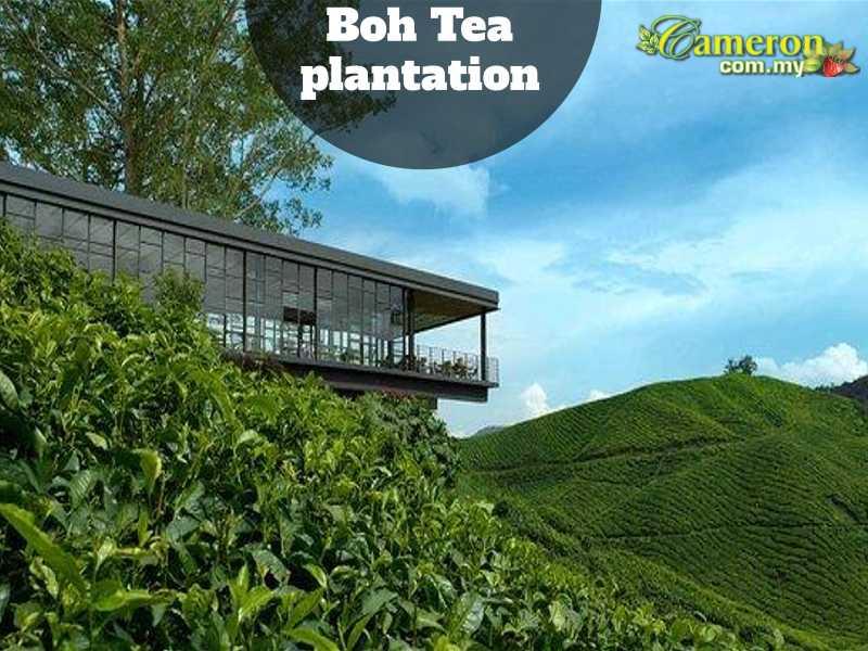 BOH-TEA-PLANTATIONS