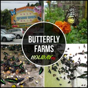 BUTTERFLY FARMS