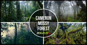 CAMERON MOSSY FOREST