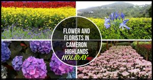 Flower and florists in Cameron Highlands