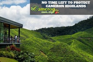 NO-TIME-LEFT-TO-PROTECT-CAMERON-HIGHLANDS