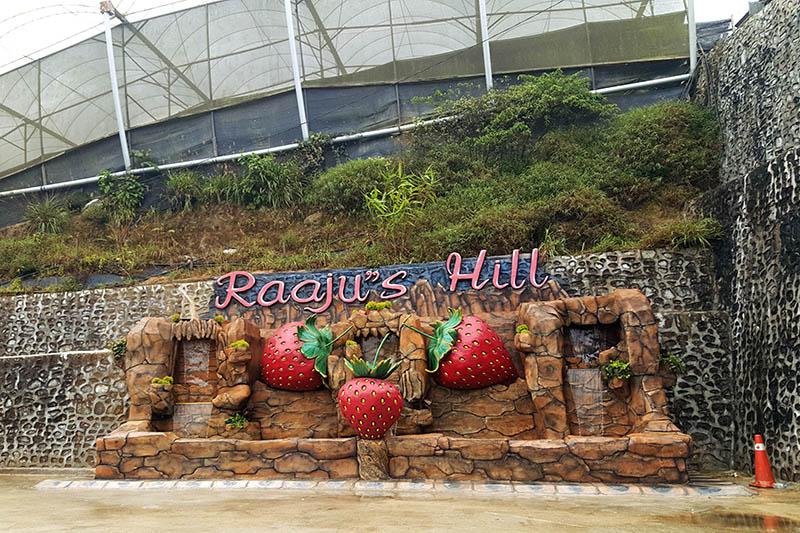 raajus_hill_strawberry_farm_cameron_highlands