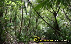 cameron_jungle_walk