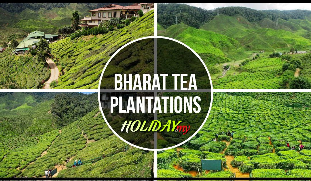 Bharat Tea Valley