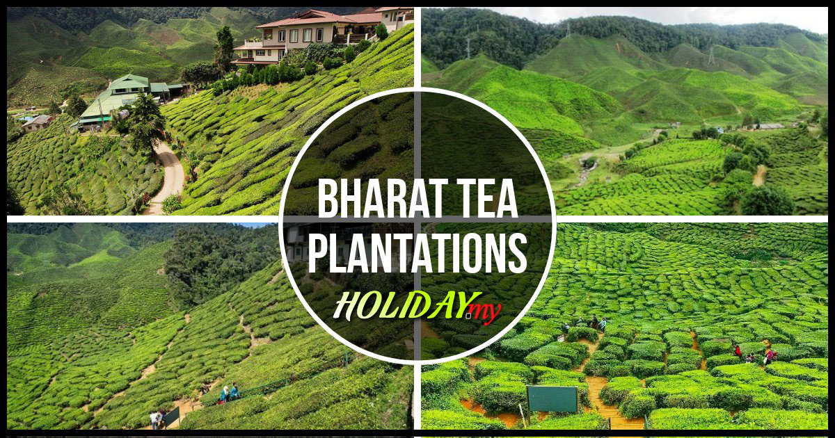 Bharat tea plantations