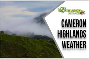 Cameron-Highlands-Weather