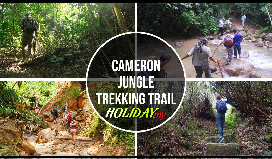 Cameron Jungle Trekking Trail