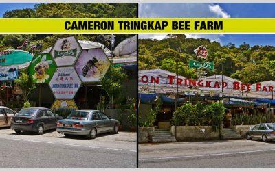 CAMERON TRINGKAP BEE FARM