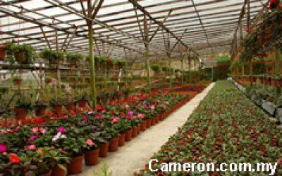 cameron_farm